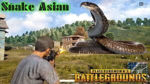 battlegrounds máu chó nổi lên ffq snake youtube
