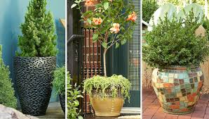 Tropical Potted Plants Outdoor - potted trees for a beautiful porch