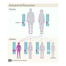 inheritance pattern quizlet xeroderma pigmentosum genetics home reference