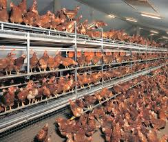 Styles Of Houses To Build Best Types Of Poultry Houses With Type Of Houses Inside For
