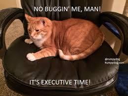Memes Cats - cat memes because my cats are smartasses rumpydog