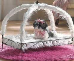my cute cute dog gansiaole