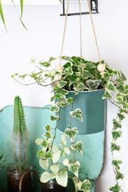 Cascading Indoor Plants by 305 Best Kwiaty Doniczkowe Images On Pinterest Indoor Plants