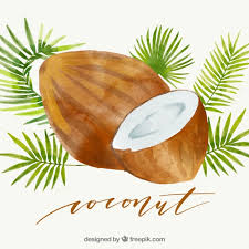 coconut vectors photos and psd files free