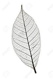 219 best leaf template outlines images on pinterest draw leaves