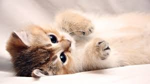 Cute Wall Papers by Cute Laptop Wallpapers Group 68