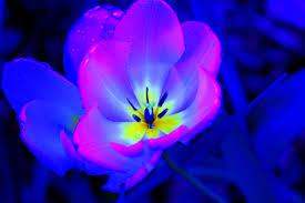 purple and blue flowers pin by bainter berkowitz on flowers flowers