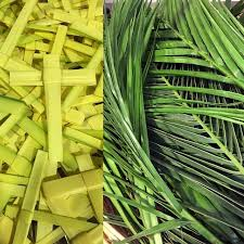 palm for palm sunday for palm sunday hey jesus won t you fight for me episcopal cafe