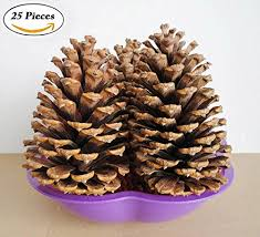 turkey pinecone craft thanksgiving jinxy