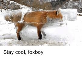 Stay Cool Meme - stay cool foxboy cool meme on me me