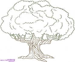 simple drawing of a tree best 12 draw trees drawing art gallery