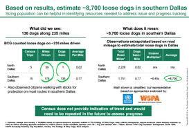 bcg presentation solving dallas u0027 stray dog problem