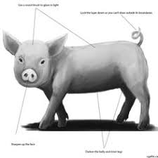 how to draw a pig in photoshop round brush sketches and shapes