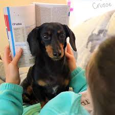 crusoe the celebrity dachshund home facebook