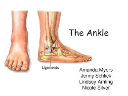 Ankle Anatomy Ligaments Ankle Bones Picture Anatomy Organ