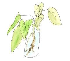 Vase Of Flowers Drawing Blind Contour Drawing Of A Vase Of Flowers Art Pinterest