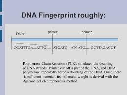 biometrics ii performance measure example face verification ppt