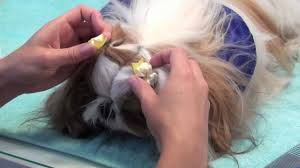 grooming series puppy pigtails youtube
