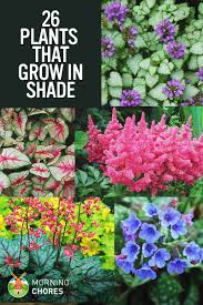 beautiful plants 25 gorgeous plants that grow in shaded area in your garden