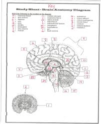 Anatomy Directional Terms Worksheet Anatomy Study Notes Image Collections Learn Human Anatomy Image