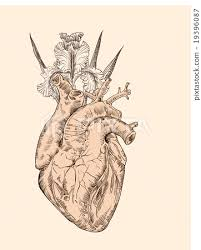 drawing human heart with flowers stock illustration 19396087