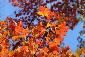 york harbor fall foliage ny harbor nature