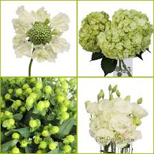 flowers for sale fresh green and crisp white flowers on sale fiftyflowers the