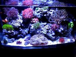 led reef aquarium lighting 22g reef tank under led lighting atlantis aquarium net youtube