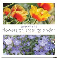 where can i buy a calendar buy small wall calendar year 5777 flowers of israel sept
