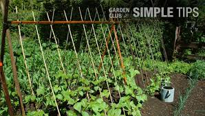Tomatoes Trellis Straighten Up Cage Stake Or Trellis Veggies This Week Garden Club