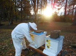 the secret lives of beekeepers