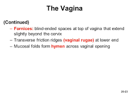 Vaginal rugae diagram image picture  for term side of card