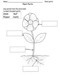 parts of a plant flower label parts by barbiew66 tpt