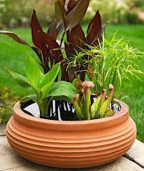 Container Water Garden Ideas Best 25 Mini Pond Ideas On Pinterest Small Water Gardens