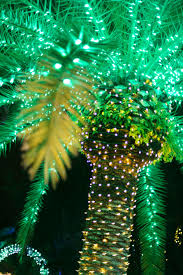 palm tree christmas tree lights palm tree christmas lights christmas lights decoration