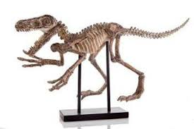 dinosaur skeleton ornament on stand museum display home of