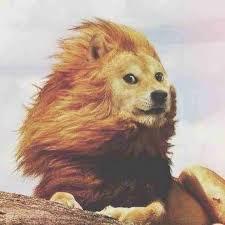 Top Doge Memes - top memes doge king