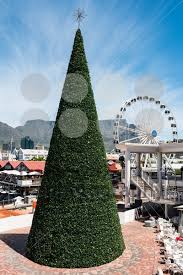 Christmas Decorations Wholesale Cape Town by Christmas Tree Beside The Sea In Cape Town South Africa Lion U0027s