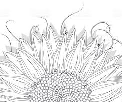 sunflower sketch stock vector art 663860172 istock