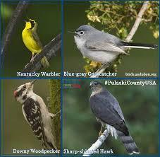 hitchhikers guide to birding in pulaski county pulaski county usa