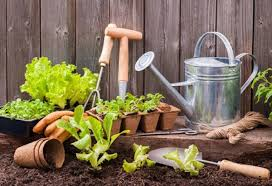 the gardener u0027s tools everyone needs