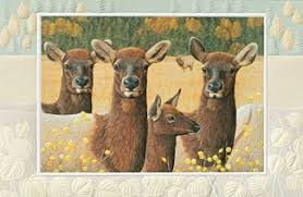 pumpernickel press wildlife cards shane dimmick greeting cards pumpernickel press