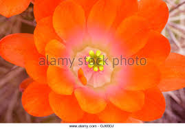 hues of orange multiple petals stock photos multiple petals stock images alamy