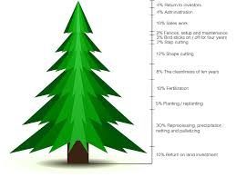 christmas tree prices prices and payment overgaard i s