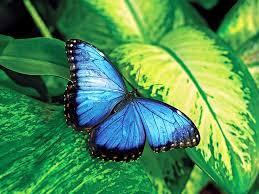 butterfly moths fact or fiction britannica com