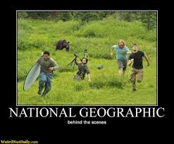 Running Bear Meme - funny pictures weirdnutdaily national geographic behind the