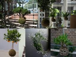 come realizzare un giardino pensile come realizzare un kokedama piante pensili senza vaso guida