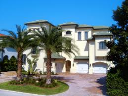 sylvester palm tree sale buy sylvester palm trees in miami ft lauderdale kendall