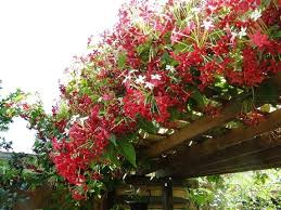 Fragrant Plants List - fragrant flowers in india with amazing fragrant complete list