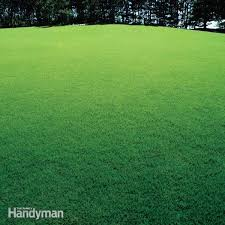 how to achieve a healthy lawn family handyman